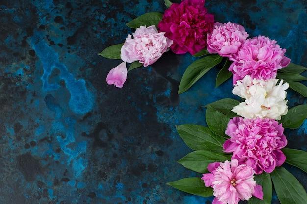 Peonies buds on a dark blue background