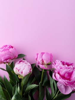 Peonies on a pink background. copy space.