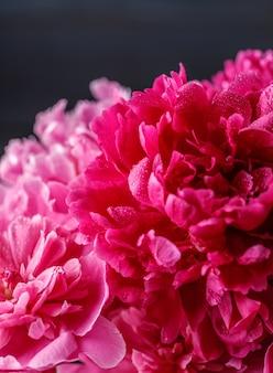 Пионы. фиолетовые пионы цветы лето цвести