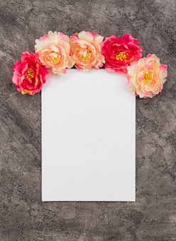Peonies and tablet on a dark concrete background