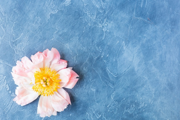 Peony flower greeting card background
