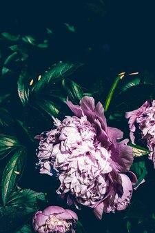 花のアートプリントと植物の自然の背景の結婚式の装飾と豪華なbとして咲く牡丹の花...