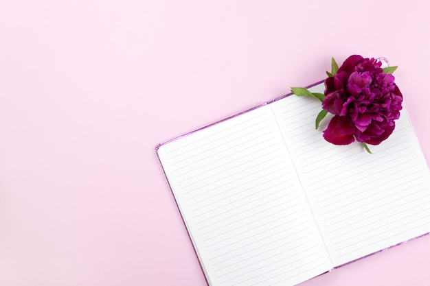 Peony flower on notepad on pastel pink background