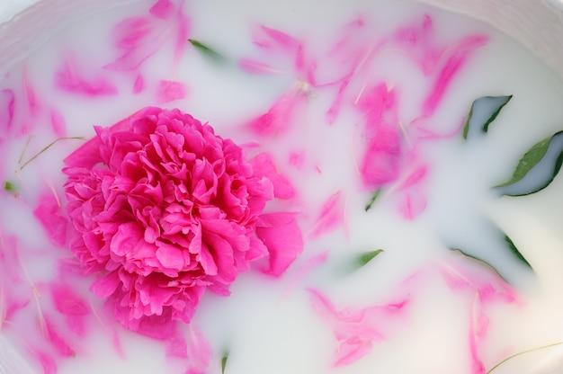 ミルクバスに花びらを持つ牡丹の花。