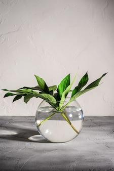 テクスチャードストーンの背景、角度ビューに水とガラス球花瓶の牡丹緑の葉
