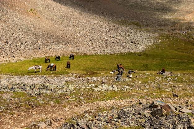 Люди и лошади отдыхают на зеленой лужайке в горах. лошади пасутся на траве. люди сидят на камнях. по горизонтали.
