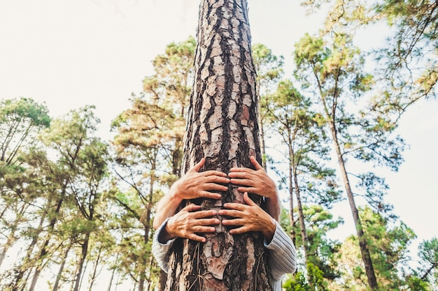 사람과 숲에서 트렁크 나무를 포옹하는 손으로 자연 환경 개념에 대한 사랑