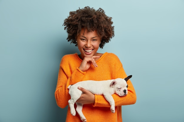 사람, 동물, 우정, 사랑 개념. 긍정적 인 아프리카 계 미국인 여자는 프랑스 불독 품종의 애완 동물 강아지를 보유하고 진심으로 웃으며 턱 아래에 손을 유지하고 파란색 벽 위에 실내에 서 있습니다.