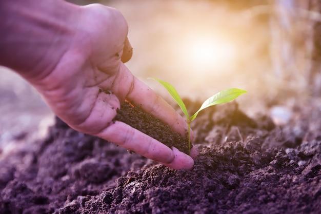 人々は植え付けや成長のための木を準備するために、木の苗を手にしています。