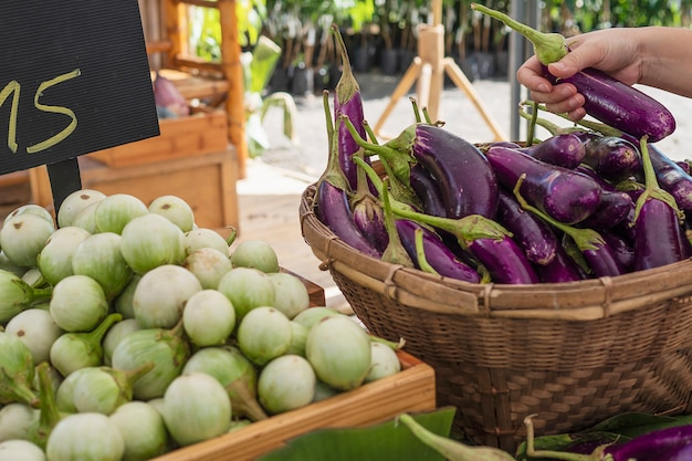 People buy fresh eggplant in local market - customer in vegetables market concept
