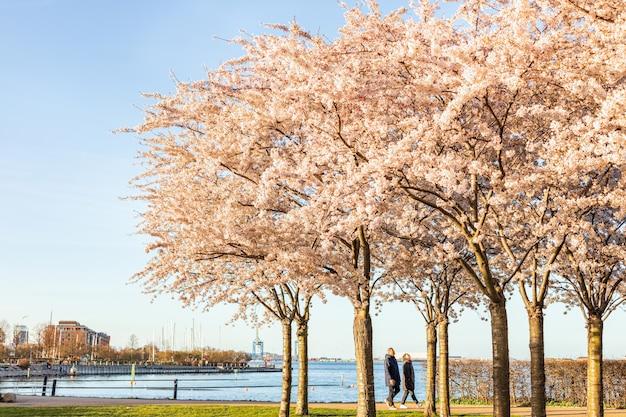Люди отдыхают под деревьями сакуры в городском парке