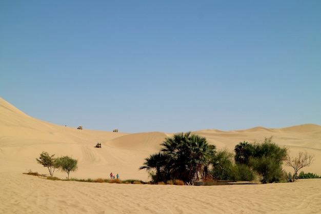 People enjoy the activities around the small oasis on the immense sand dunes of huacachina desert, ica region, peru