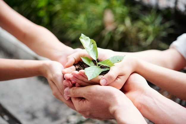植物を育てる人々