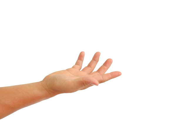 People hand with open palm up or receive gesture isolated on white background.