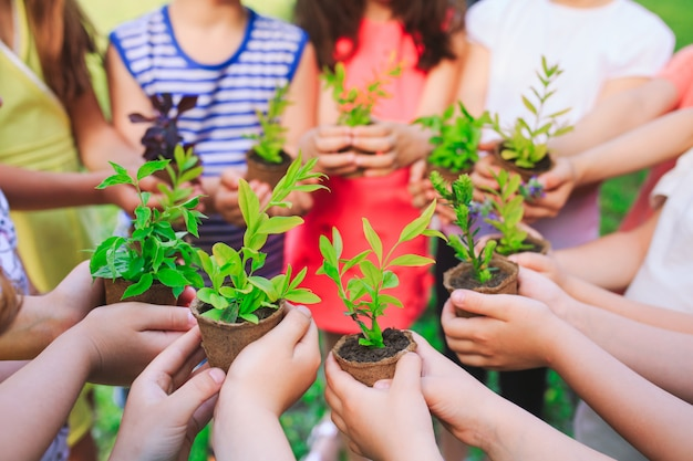 People hands cupping plant nurture environmental