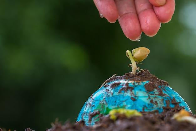 人々は地球モデルで若い種まき植物に水をまく手