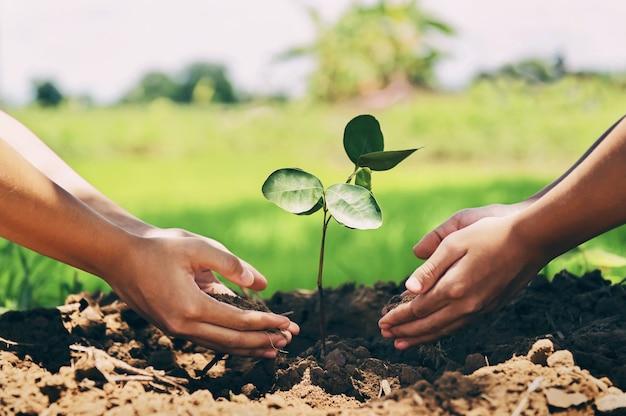 木を植えるのを助ける人々