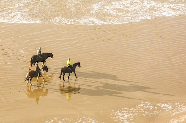 People horse riding on the beach, aerial view