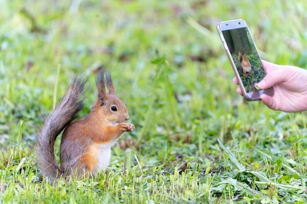 공원에서 먹는 붉은 다람쥐 사진을 찍는 공원 사람들