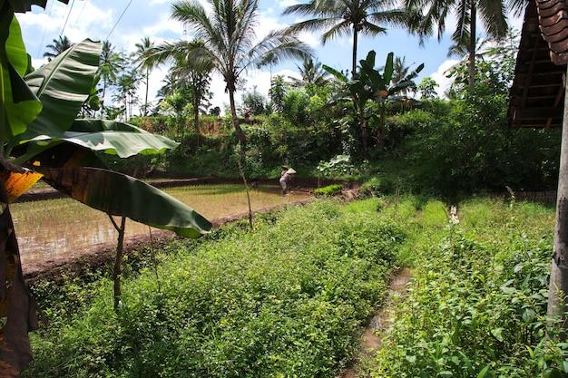 인도네시아 마을의 논에 있는 사람들