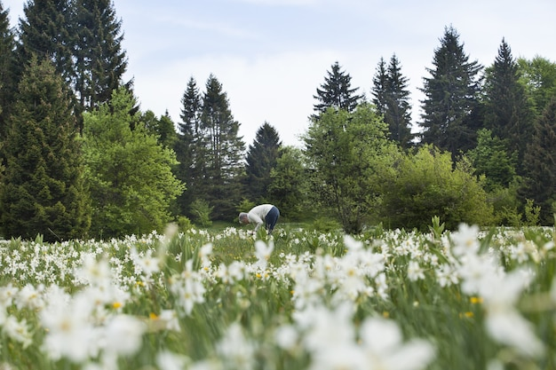 フランス、カーヴィリ川で春に水仙の花を摘む人々