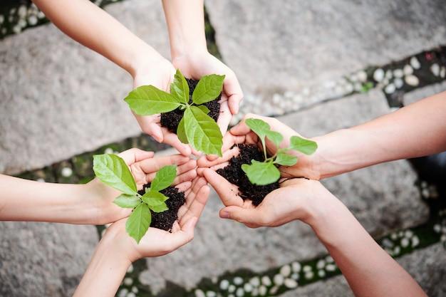 人々は新しい植物を植える