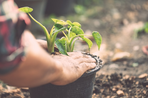 People planting green plant to plastic pot in the garden
