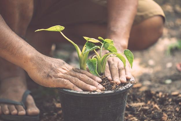 庭のプラスチックポットに緑の植物を植える人々