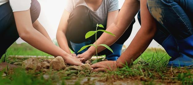 Люди сажают дерево в природе для спасения земли