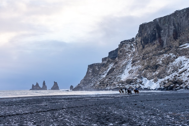People ride horses on a vik black beach and view on waves of the winter atlantic ocean