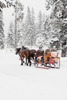 People riding on sledge with horses