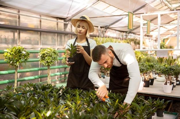 People taking care of plants together medium shot