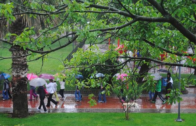 レインコートを着て傘をさして夏に歩く観光客雨の日、街の雨天。緑の茂みの後ろからのぞき効果。
