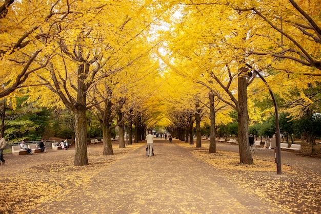 人々は東京のイチョウの街を訪れます。カラフルな黄色の銀杏の葉の木