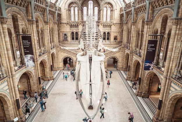 人々はロンドンの自然史博物館を訪れます。