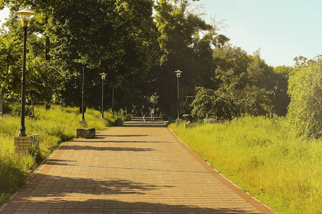 People walk by summer park on sunny day
