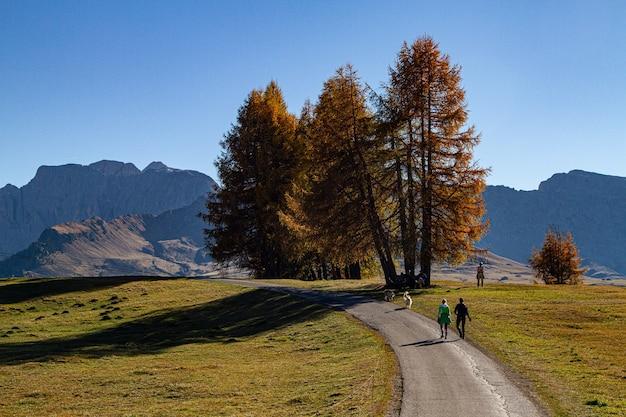 ドロミテ、イタリアの芝生のフィールドの真ん中に道を歩いている人