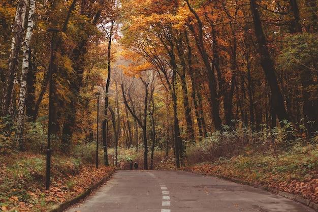 秋の都市公園で屋外を歩く人々秋のシーズンのコピースペース
