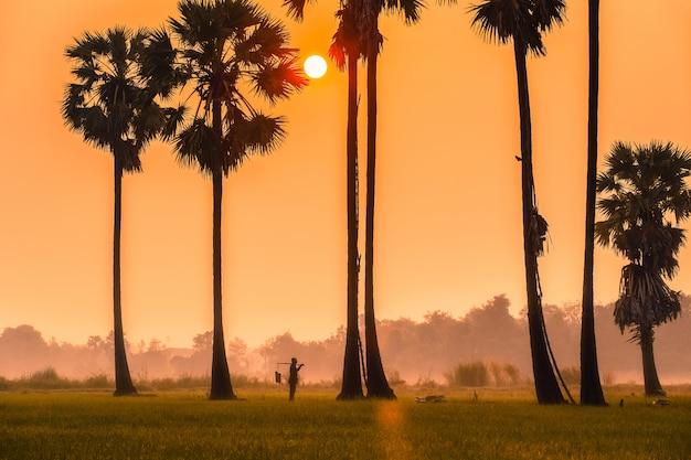タイ、アユタヤ県で新鮮を維持するためにヤシの砂糖を登るキャリアを持つ人々