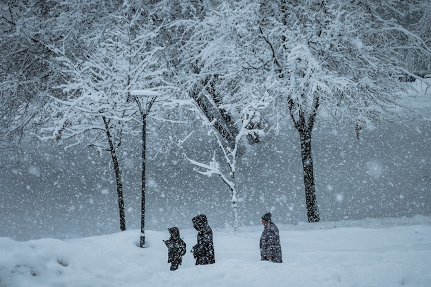 People with dogs walk in the park during a snowfall