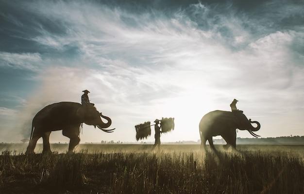 Люди, работающие на рисовых полях в таиланде