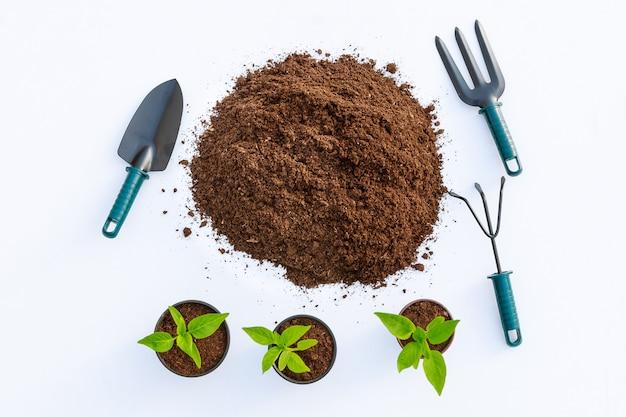 Pepper seedlings, soil and garden tools on a white table. planting pepper seedlings.