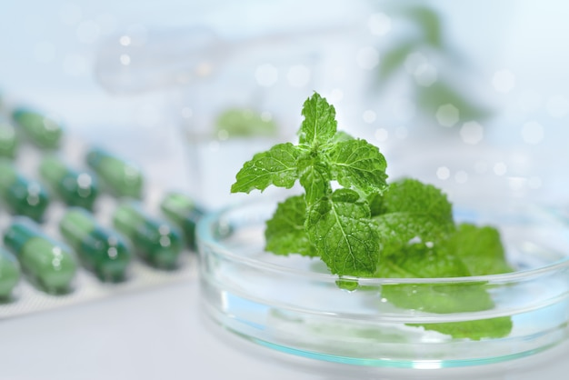 Peppermint capsules, research and development