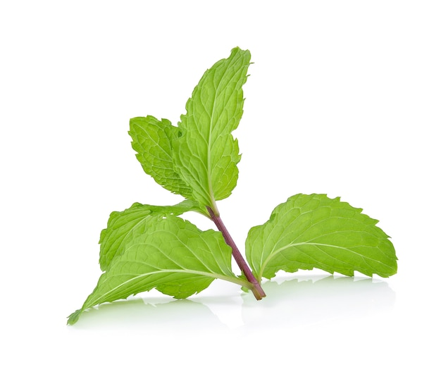 Peppermint isolated on the white background.