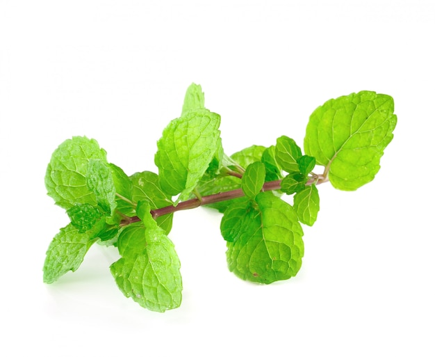 Peppermint or mint bunch isolated on white space