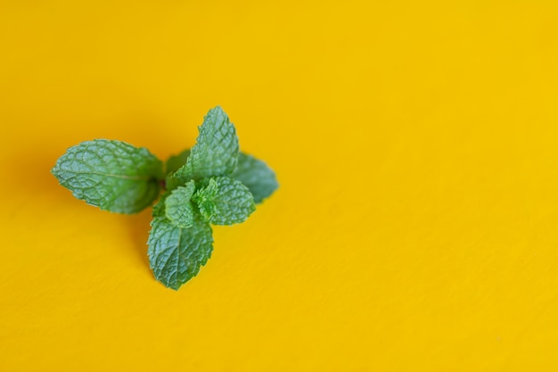Peppermint placed on a yellow background.