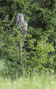 Perched owl sitting on tree in forest