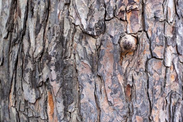 Perennial mahogany, longevity and beautiful patterns.