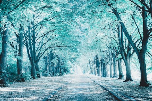 背の高い木々の間の公園の完璧な路地。青い色調の画像。冬の風景。美しい自然の背景