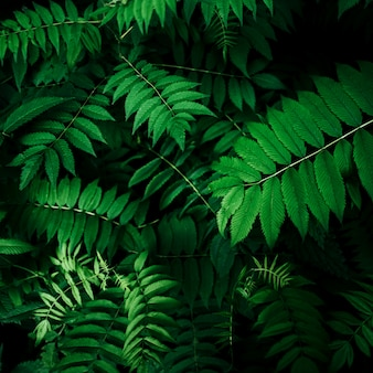 Perfect natural leaves pattern beautiful tropical